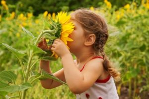 Child-and-sunflower